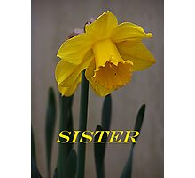 Daffodil Sister Card Photographic Print