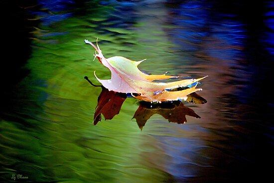Floating Fall Leaf... by LjMaxx