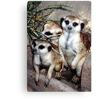Meercat Manners Canvas Print
