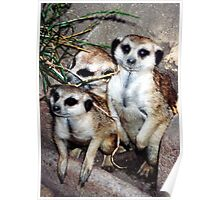 Meercat Manners Poster