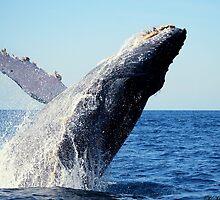 A breaching Whale by LjMaxx