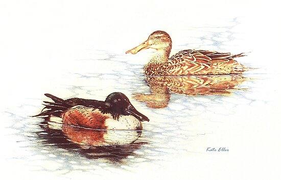 Mallards in Still Water by Kate Eller