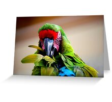 Had my feathers ruffled today.... Greeting Card