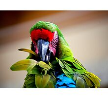 Had my feathers ruffled today.... Photographic Print