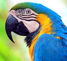 Macaw... by LjMaxx