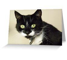 Model cat Greeting Card