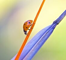 Ladybug Colors by Barbara  Brown
