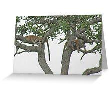 Leopard Siesta, Serengeti National Park, Tanzania, Africa Greeting Card