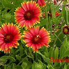 Flowers for Mom  252 Views by Rosalie Scanlon