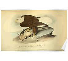 James Audubon Vector Rebuild - The Birds of America - From Drawings Made in the United States and Their Territories V 1-7 1840 - White Headed or Bald Eagle Poster