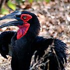 THE SOUTHERN GROUND HORNBILL by Magaret Meintjes