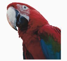 Close-Up Of A Green-Winged Macaw Background Removed Kids Clothes
