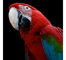 Close-Up Of A Green-Winged Macaw Background Removed Photographic Print