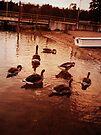 Beach shore ducks by schizomania