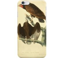 James Audubon Vector Rebuild - The Birds of America - From Drawings Made in the United States and Their Territories V 1-7 1840 - Red Headed Turkey Vulture iPhone Case/Skin