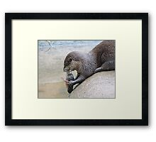 Nom Nom Nom, Tasty Fishy Framed Print