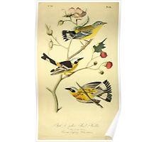 James Audubon Vector Rebuild - The Birds of America - From Drawings Made in the United States and Their Territories V 1-7 1840 - Black and Yellow Wood Warbler Poster