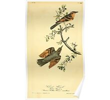 James Audubon Vector Rebuild - The Birds of America - From Drawings Made in the United States and Their Territories V 1-7 1840 - Varied Thrush Poster