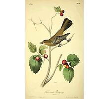 James Audubon Vector Rebuild - The Birds of America - From Drawings Made in the United States and Their Territories V 1-7 1840 - Townsend's Ptiliogony Photographic Print