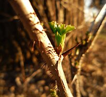 Green Thorn by AJStuder