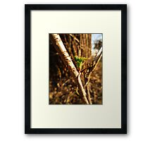 Green Thorn Framed Print