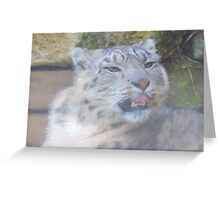Snow Leopard Portrait (Photo Cezanne Style) Greeting Card