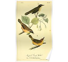 James Audubon Vector Rebuild - The Birds of America - From Drawings Made in the United States and Their Territories V 1-7 1840 - Maryland Ground Warbler Poster