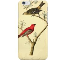 James Audubon Vector Rebuild - The Birds of America - From Drawings Made in the United States and Their Territories V 1-7 1840 - Common Pine Finch iPhone Case/Skin