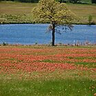 Indian Paintbrush Field by mwfoster