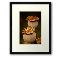 Seedpods Framed Print
