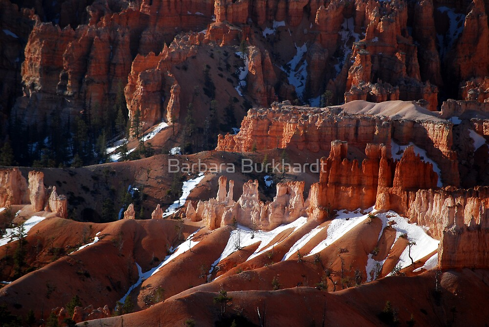 Red Earth - Bryce Canyon by Barbara Burkhardt