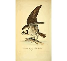 James Audubon Vector Rebuild - The Birds of America - From Drawings Made in the United States and Their Territories V 1-7 1840 - Common Osprey Fish Hawk Photographic Print