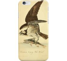 James Audubon Vector Rebuild - The Birds of America - From Drawings Made in the United States and Their Territories V 1-7 1840 - Common Osprey Fish Hawk iPhone Case/Skin