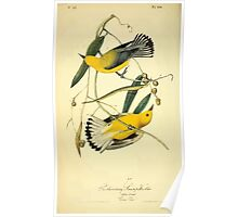 James Audubon Vector Rebuild - The Birds of America - From Drawings Made in the United States and Their Territories V 1-7 1840 - Prothonotary Swamp Warbler Poster