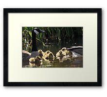 Liquid Gold Framed Print