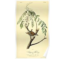 James Audubon Vector Rebuild - The Birds of America - From Drawings Made in the United States and Their Territories V 1-7 1840 - Chipping Bunting Poster