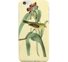 James Audubon Vector Rebuild - The Birds of America - From Drawings Made in the United States and Their Territories V 1-7 1840 - Small Headed Flycatcher iPhone Case/Skin
