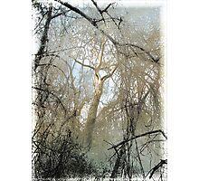 Bidwell Trees Photographic Print