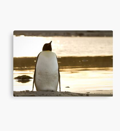 Penguin at sunset Canvas Print