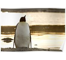 Penguin at sunset Poster