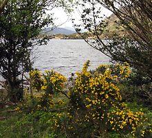 Killarney lakes 11 by John Quinn