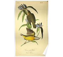 James Audubon Vector Rebuild - The Birds of America - From Drawings Made in the United States and Their Territories V 1-7 1840 - Connecticut Warbler Poster