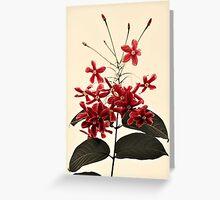 flower power Greeting Card