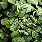 Clover by MickDodds