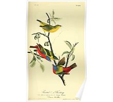 James Audubon Vector Rebuild - The Birds of America - From Drawings Made in the United States and Their Territories V 1-7 1840 - Painted Bunting Poster