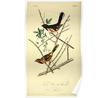 James Audubon Vector Rebuild - The Birds of America - From Drawings Made in the United States and Their Territories V 1-7 1840 - Towhe Ground Finch Poster