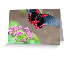 The Beauty of Flight Greeting Card
