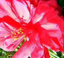 Flower Power by poshrice