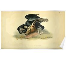 James Audubon Vector Rebuild - The Birds of America - From Drawings Made in the United States and Their Territories V 1-7 1840 - Black Vulture or Carrion Crow Poster