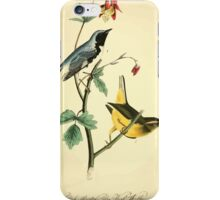James Audubon Vector Rebuild - The Birds of America - From Drawings Made in the United States and Their Territories V 1-7 1840 - Black Throated Blue Wood Warbler iPhone Case/Skin